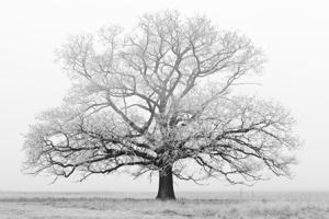 Winter - Tree